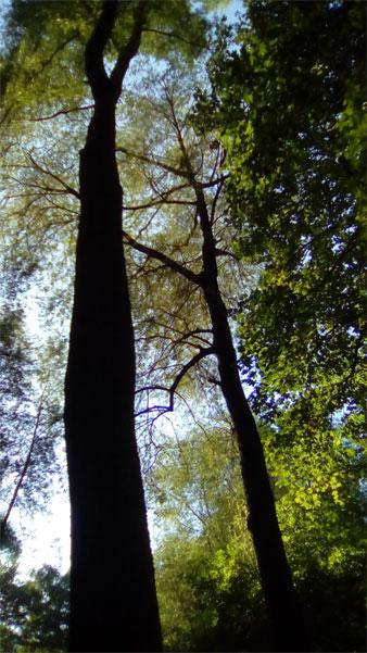 Wald am See