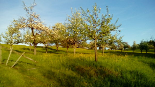 Obstwiese am See