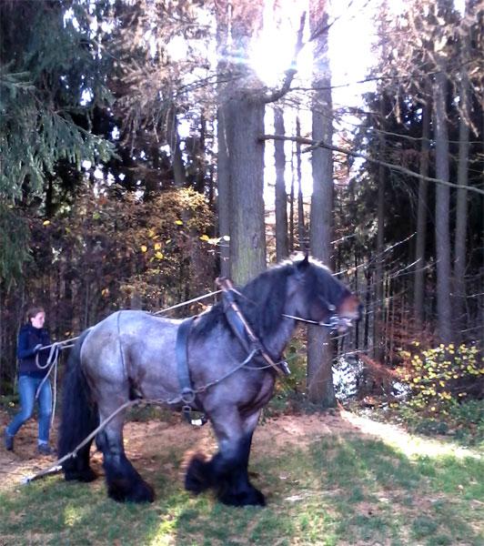 Aachener Wald - ich dachte, ich träume